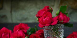 Most beautiful Roses